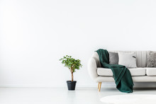 Green Plant In Black Pot Next To Beige Couch With Emerald Green Blanket