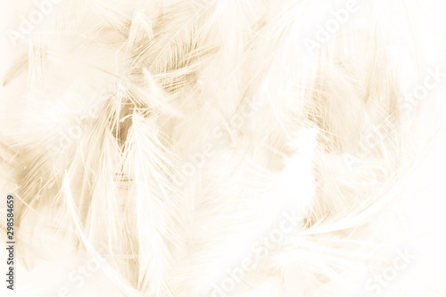 Beautiful abstract yellow and brown feathers on white background and colorful soft orange feather texture - 298584659
