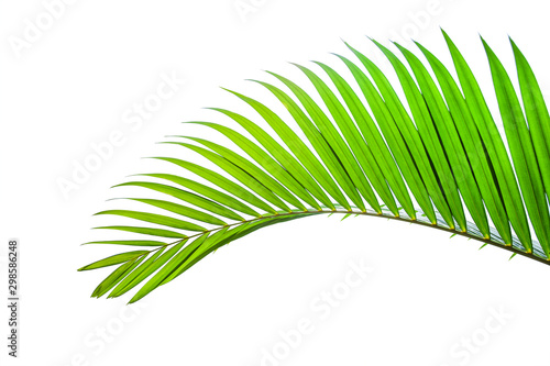 In de dag Palm boom tropical coconut leaf isolated on white background, summer background