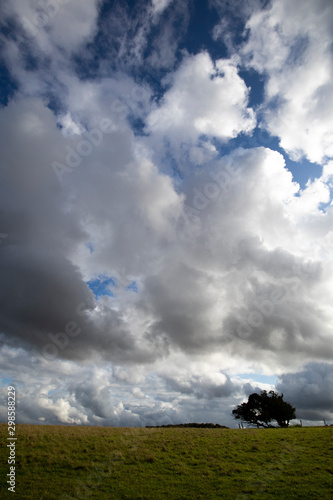 Tablou Canvas Silhouetted windswept stunted tree on farm grassland field in rural Hampshire ag