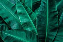 Tropical Banana Leaf Texture I...