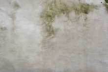 Background Of An Old Concrete Wall Partially Painted White With Fine Texture And Traces Of Moss And Mold From High Humidity