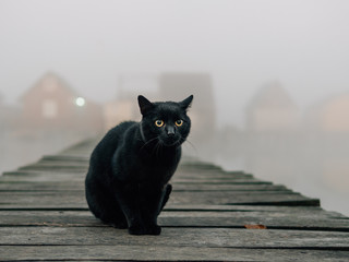 Black cat outdoor. Foggy morning over the lake.