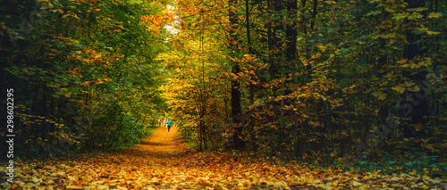 A woman athlete run in the autumn forest. Jogging in an amazing autumn forest strewn with fallen leaves