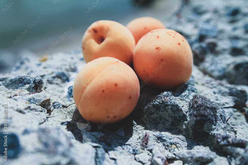 Fototapety, obrazy: Apricots by the sea