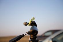 Praying Mantis On The Tripod.