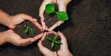 Top View Three Hand Holding Plant On Soil. Eco Concept