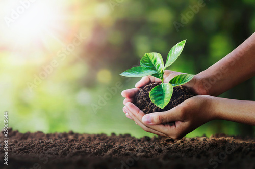 Valokuva hand holding young plant on soil and green nature background