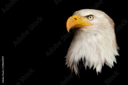 Tablou Canvas Bald Eagle