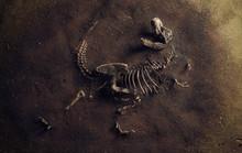 Dinosaur Fossil (Tyrannosaurus...