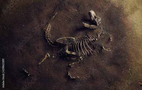 Dinosaur Fossil (Tyrannosaurus Rex) Found by Archaeologists Wallpaper Mural