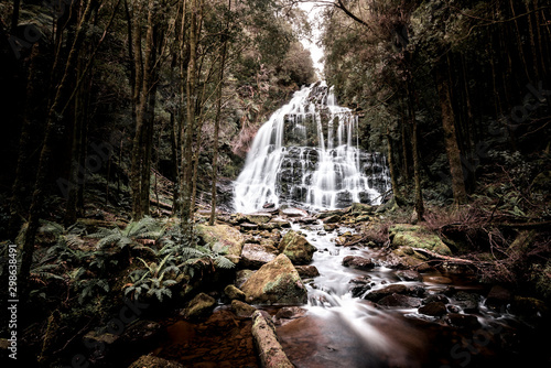 Garden Poster Forest river Bush hike past waterfalls and through the jungles of Tasmania, Australia's largest island with a fascinating natural environment. Perfect for those who love the landscapes and wildlife, as well as the