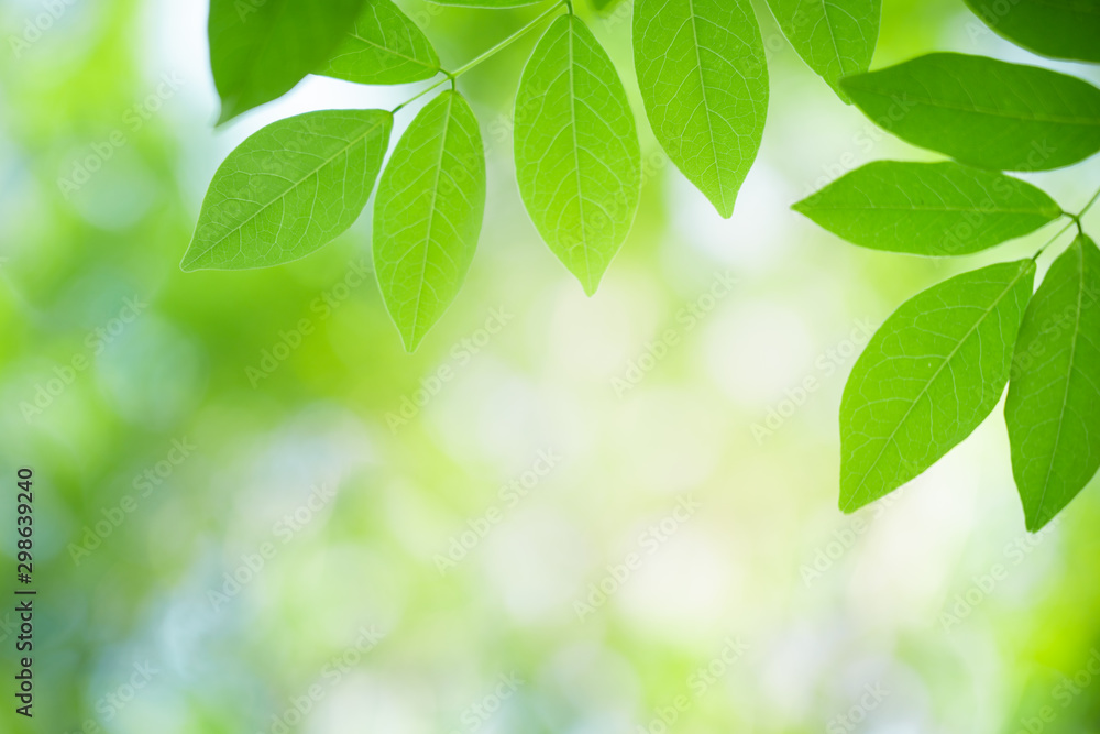 Fototapety, obrazy: Green leaf with beautiful bokeh with copy space for text. Nature and fresh background concept.