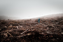 Person Stands In The Middle Of A Dead Forest Surrounded By Dense Fog, Lumbered By Timber Industry, Tarkine Forest, Tasmania, Australia