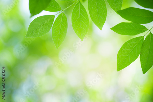 fototapeta na lodówkę Green leaf with beautiful bokeh with copy space for text. Nature and fresh background concept.