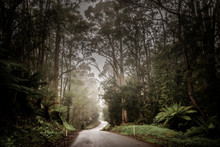 Hiking In Tasmania, Australia ...