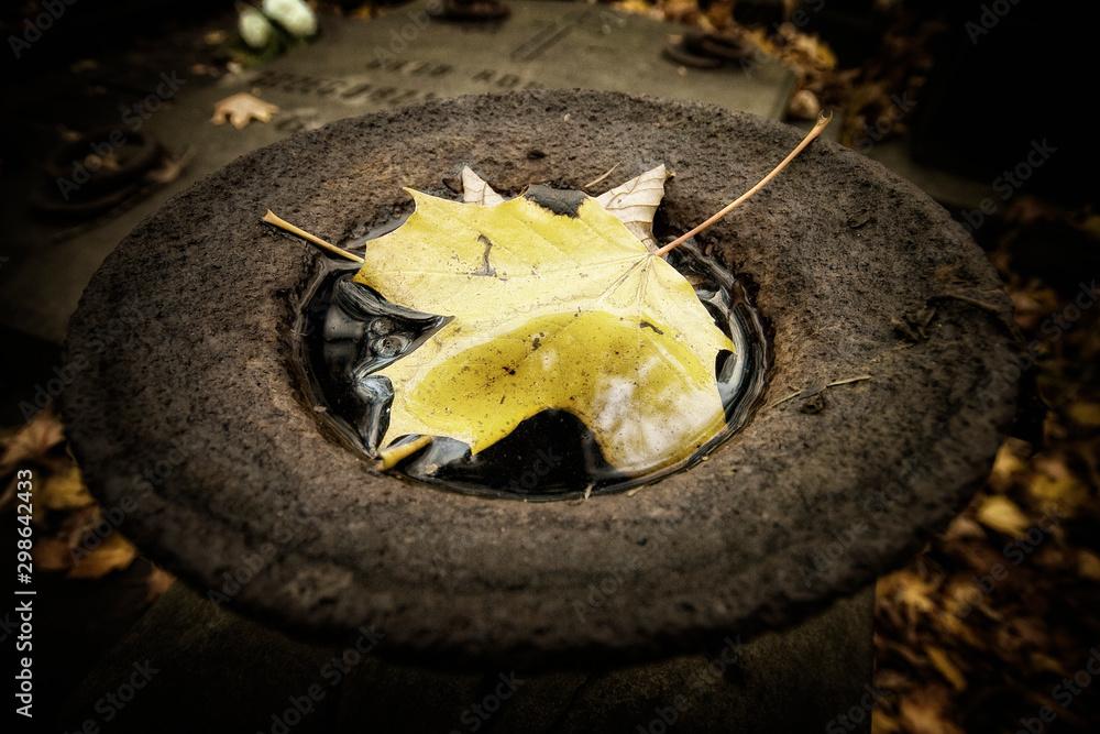 Fototapeta liść jesień