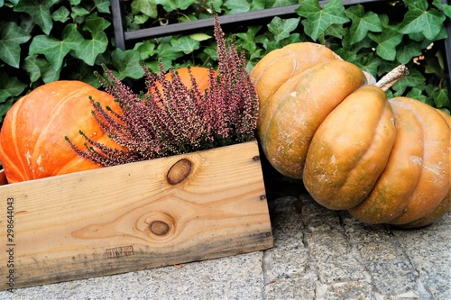 Obraz autumn composition pumpkins and flowers in a box of wood - fototapety do salonu