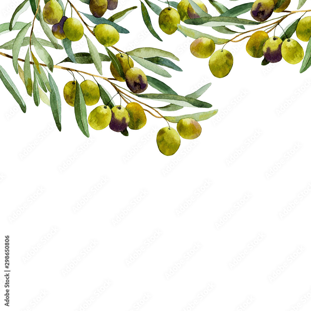 Fototapety, obrazy: watercolor olive branch on white background