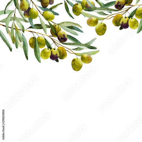 Fotografía  watercolor olive branch on white background