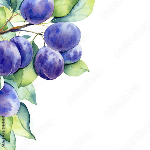 Photo watercolor fruit plum branch