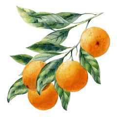 Panel Szklany Do jadalni watercolor fruit orange branch