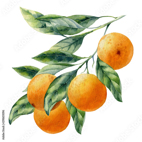watercolor fruit orange branch