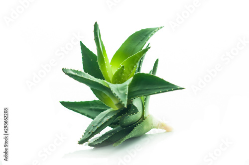 Aloe vera plant isolated on white background Wallpaper Mural