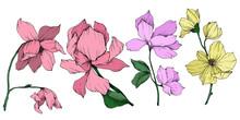 Vector Magnolia Floral Botanic...