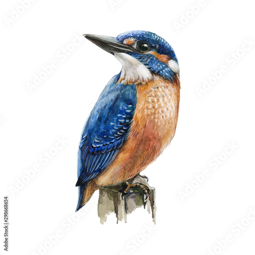 Canvas-taulu Kingfisher bird sitting on a tree branch watercolor illustration