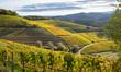Herbstliche Weinberge in Durbach in der Ortenau