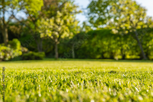 Photo Ground level, shallow focus view of a newly cut, well maintained garden lawn seen just before dusk