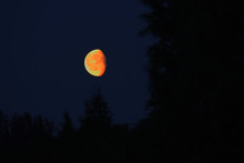Waxing Moon In Vibrant Orange ...