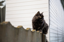 The Cat Sits On The Fence And ...