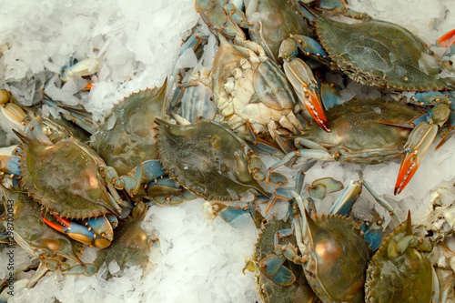 background, catch, close, close view, close-up, cold, crabs, crustacean, dead, flavor, food, fresh, freshness, gourmet, healthy, ice, marine, mediterranean, natural, nutrition, pile, raw, seafood, sea