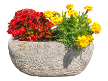 Cut Out Flowers In Pot. Red And Yellow Flowers Isolated On White Background. Colorful Bouquet Of Flowers. Bunch Of Potted Flowers. High Quality Clipping Mask.