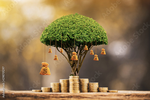 Fototapeta Stacking gold coins and money bag of tree with growing put on the wood on the morning sunlight in public park, Saving money and loan for business investment concept. obraz