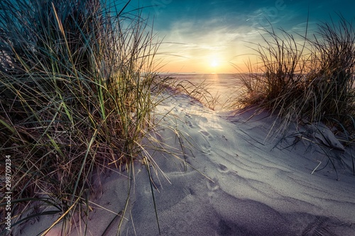 Poster Gras Beautiful scenery of grass grown in the sand on the seashore with sunset in the background