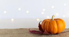 Pumpkin On Maple Leaf Sitting ...