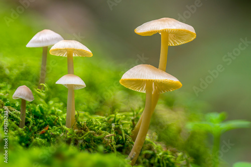 Photo  Fresh tasty mushrooms from the green forest