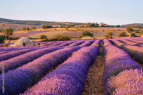 Fotobehang Lavendel Champ de lavande, coucher de soleil. cabane en pierres sèche (borie) au milieu du champ. Ferrassières, Provence, France.