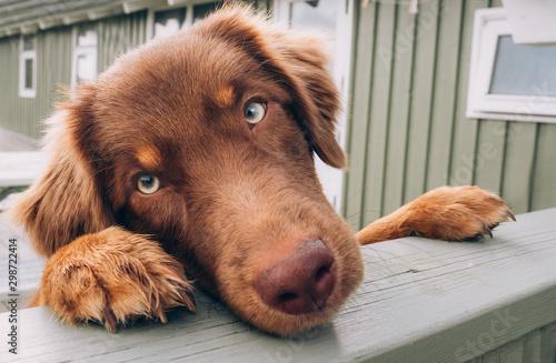 Foto Bettelnder Hund am Gartenzaun
