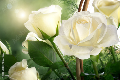 Autocollant pour porte Roses roses, background image ,roses in the garden,beautiful roses