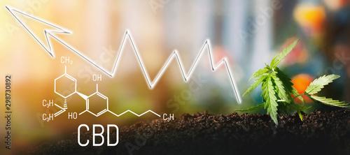 Carta da parati  Business marijuana leaves cannabis stock success market price arrow up profit growth charts graph money display screen up industry trend grow higher quickly