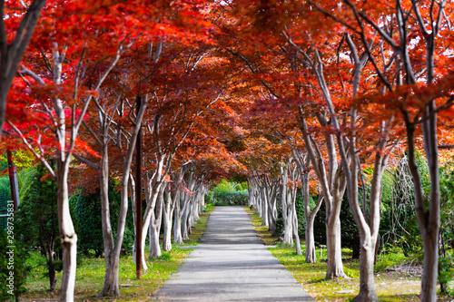 Pinturas sobre lienzo  秋の並木道
