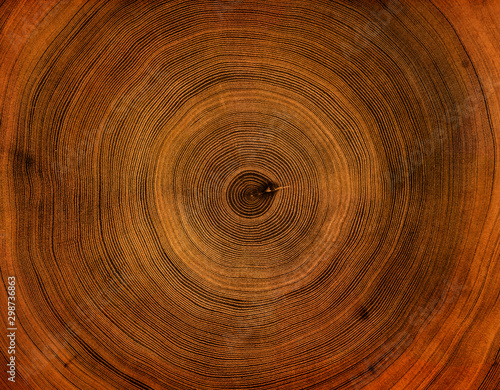 Fotomural  Old wooden tree cut surface