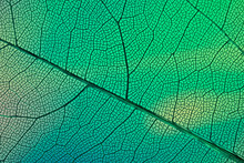 Texture Of Green Leaf Background