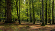 canvas print picture - Woodland walk in the new forest in Autumn