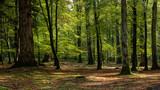Fototapeta Las - Woodland walk in the new forest in Autumn