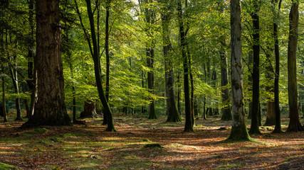 Šetnja šumom u novoj šumi na jesen